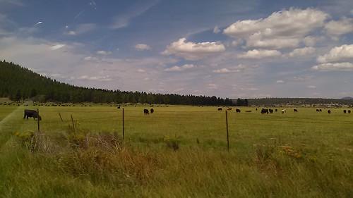 travel nature oregon skies cows farmland grassland