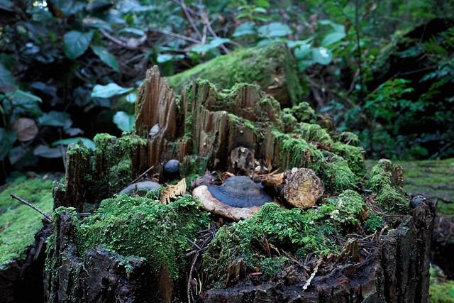 moss highrises