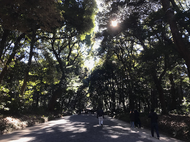 Evergreen Forest in Meiji Shrine