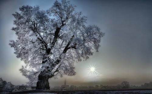 regensburg upperpalatinate bayern bavaria sunset whitefrost winter