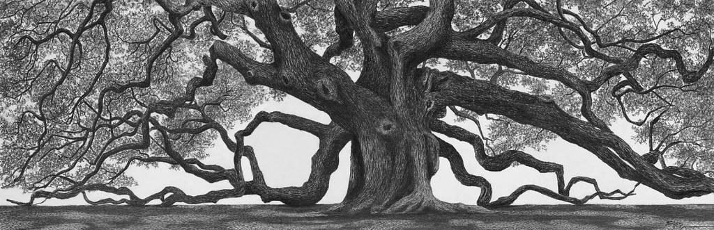 angel oak flickrcopy