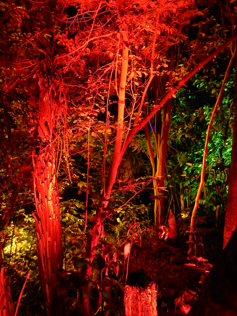 Christmas Bush Lights.Christmas Lights Extravaganza Bush City Te Papa Jacqi B