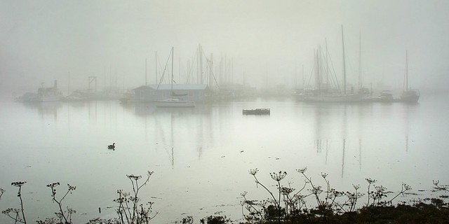 sitting down at the bay . . . watchin' the fog rollin' in