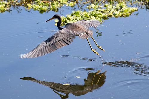outdoor seaside shore sea sky water nature wildlife 7dm2 ocean canon florida bird