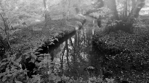 creek misty forest woods reflections water grey black white monochrome trees wood plants nature angietrenz trenzfotonrw