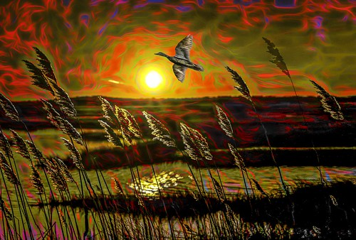 sunset sun sky bird reeds color attenting digital art colorful day graffiti window flickr country bright happy colour eos scenic america world beach water red nature blue white tree green light cloud park landscape summer city yellow people old new photoshop google bing yahoo stumbleupon getty national geographic creative composite manipulation hue pinterest blog twitter comons wiki pixel artistic topaz filter on1 image facebook tinder tumbler unique unusual fascinating life outside