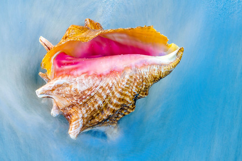 Seashell in the Waves | by Charles Patrick Ewing