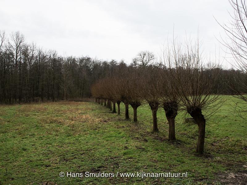 818_0011 - Mussenbroek Roggel
