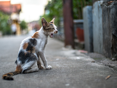 Cat | by Henry Sudarman