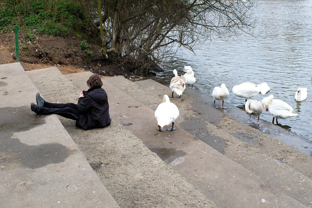 A boy sits on some steps with some swans