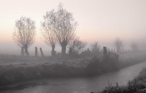 middendelfland fencefrday hff mist trees
