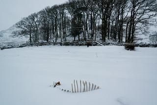 herdwick   by Nils Jorgensen