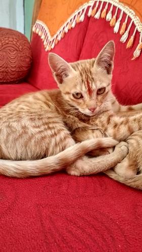 cat browncats cutecat catpicsinhdr vipul5549pics mobilephotography