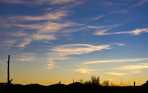 desert cactus sunrise