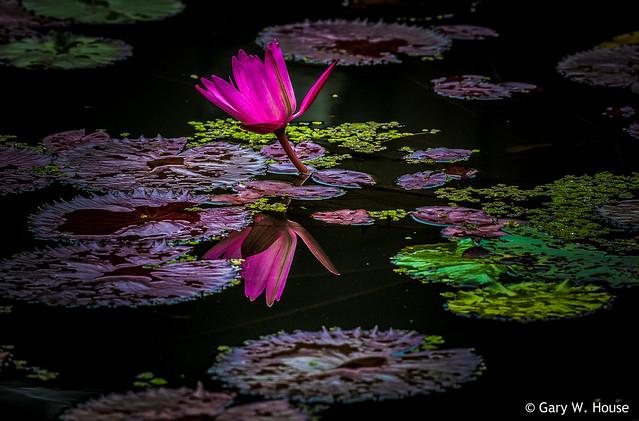Autumn at Kenilworth Aquatic Gardens - 2