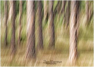 WARPED TREES by Jean Merriman