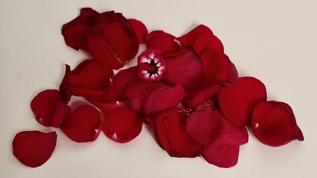Rose Pieces
