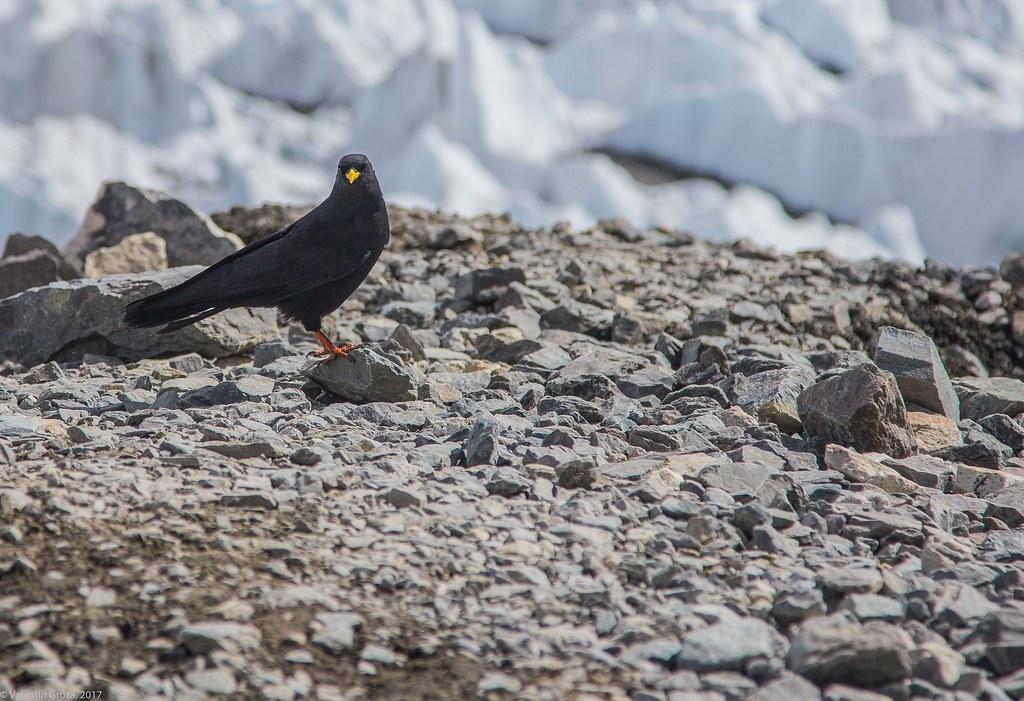 wild_Himalaya_2017_01_stancuta alpina 01