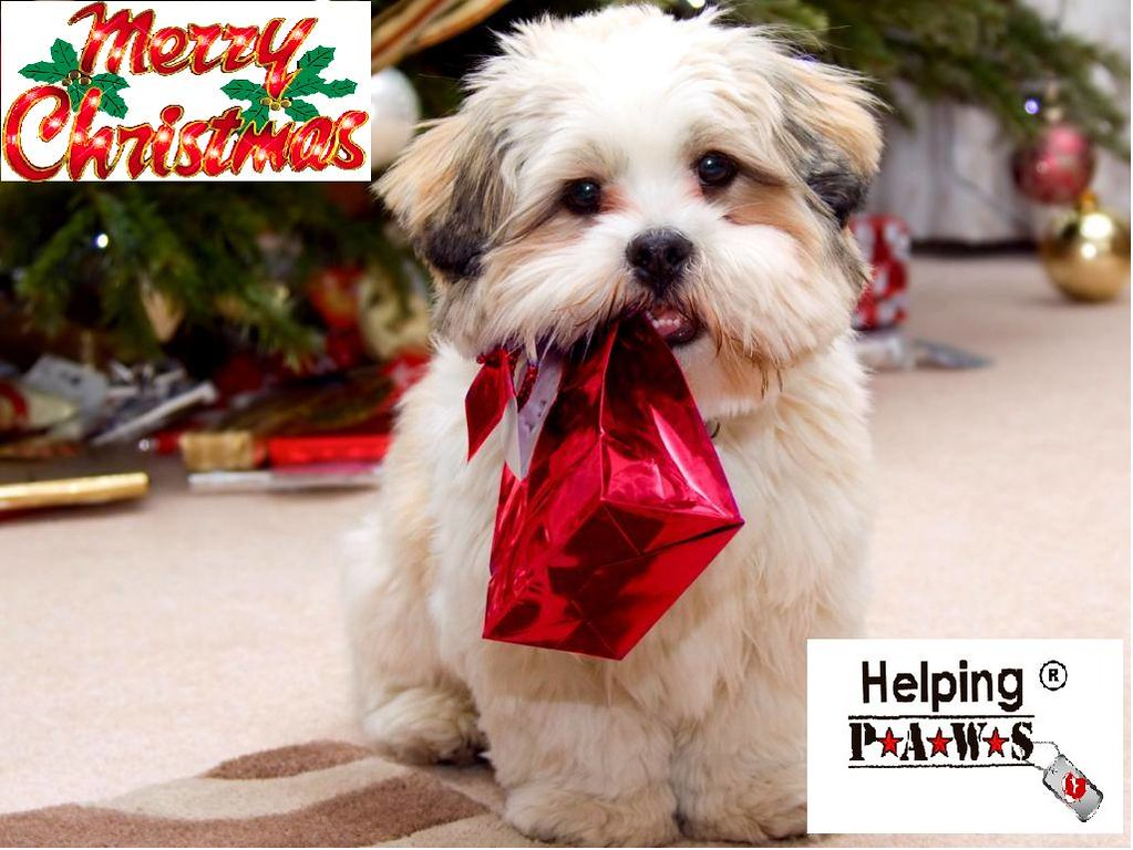 Helping Paws Holidays