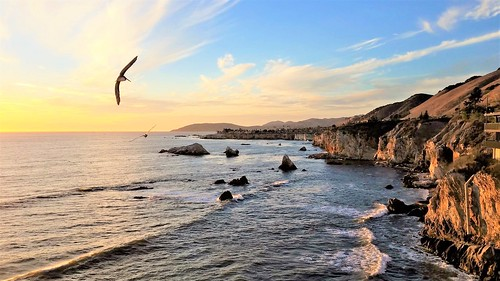 california morning photography birds excellent coast west landscape pacificocean peaceful beautiful geology pismobeach canon wide soar fly above cliffs travel best sunny day visit amazing bucketlist highway1 101 favorite place nature joy view vista moonjazz
