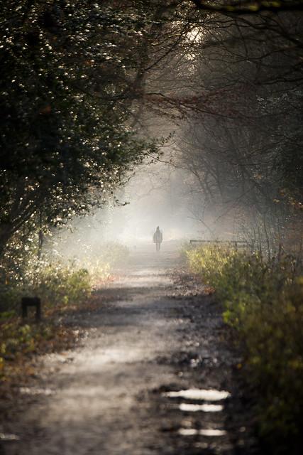 Misty Walk - Sandall Beat Wood - Doncaster