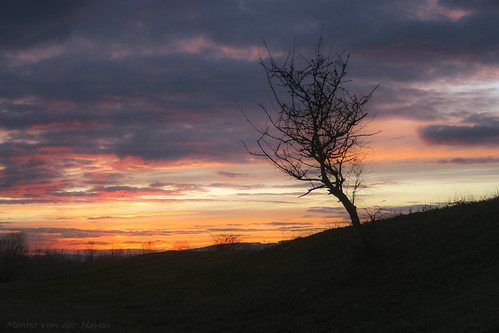 sunset tree romania minimalist minimalistic transylvania sunrise color colorful sky skyscape weather landscape targumures