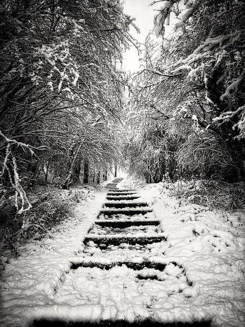 Winter V.