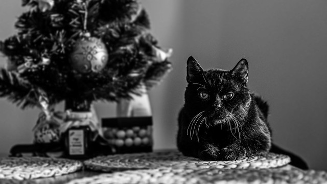 Guardian of the tree