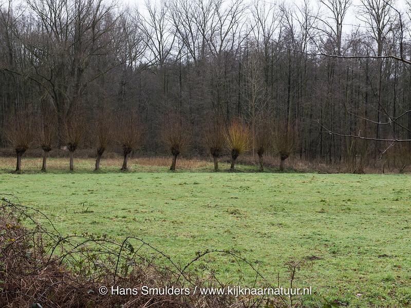 818_0009 - Mussenbroek Roggel