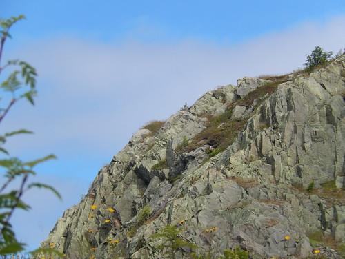 Signal Hill rots