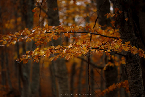trees tree leaves leaf mountain mountains nature naturesfinest national nationalgeographic natgeo landscape landscapephotography canon canoneos6d canonef100mmf28macro taniakoleska taniaphotos taniaphotography photography photo photographyart art artphotography sell buy instagram tumblr beautiful beauty