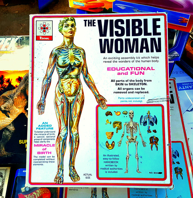 f_visiblewoman