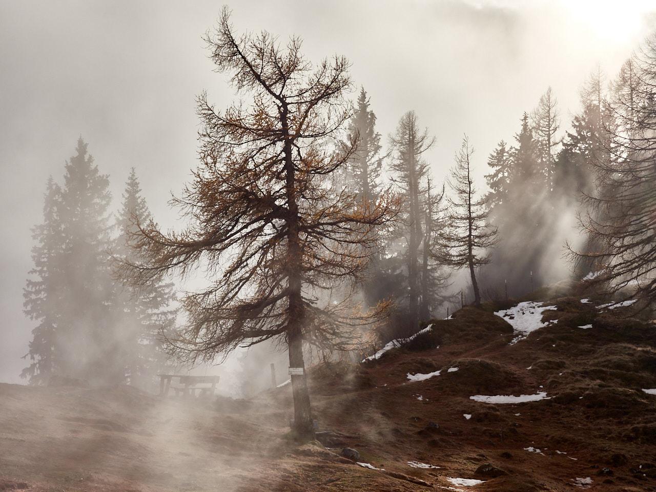 Morning fog in the mountains - Ramsau - Austria