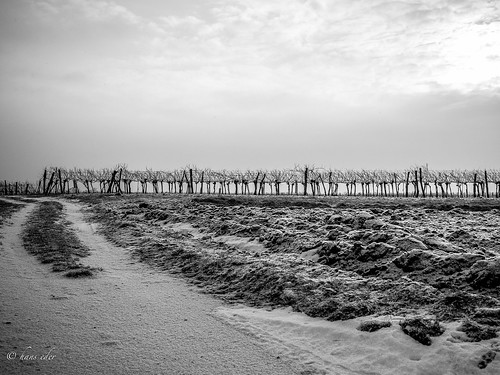 winter winyard | by hans eder1