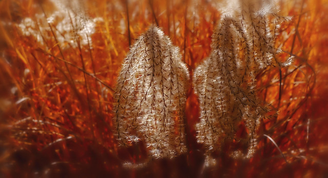 Nature's Fire (Explore)