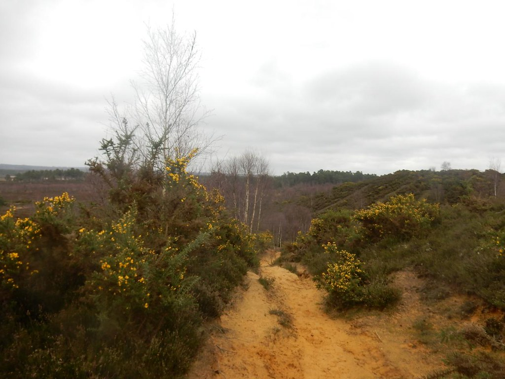Thursley Heath Milford to Haslemere