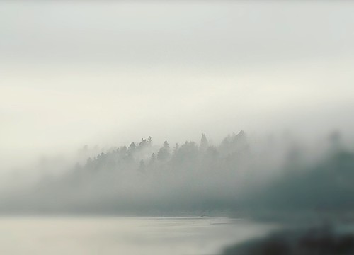 fog nebel landscape landschaft bccanada whiterock temperaterainforest beach pacificcoast