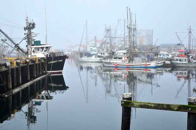 French Creek in the fog . . .