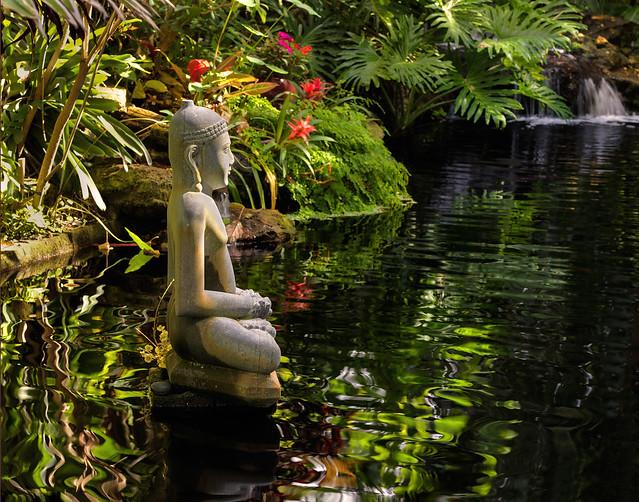 Buddha in the pool