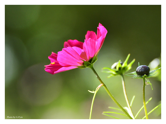 Backlit pink flower.