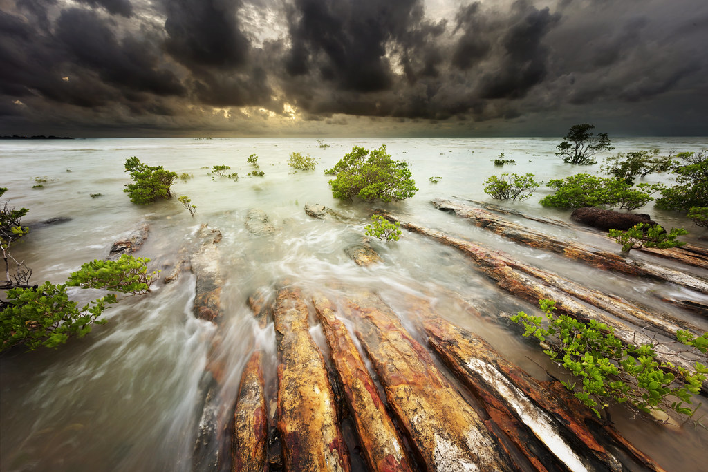 Nightcliff's Mangroves - weather watchers | Louise Denton