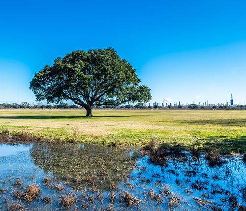 landscape louisiana chalmette battlefield road park