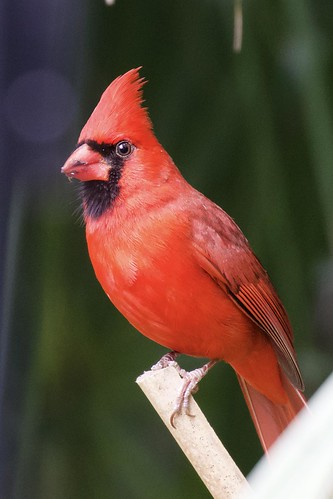 small birds felts