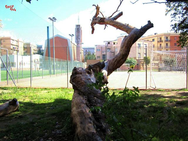 Natura quasi morta - Almost dead nature
