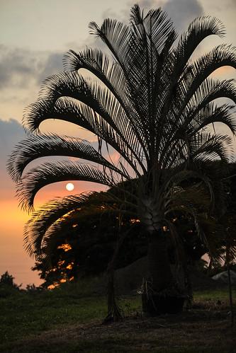 hawaii hillside captaincook konacoast kealakekua sunset palmtree sun wyojones np