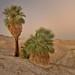2018 Anza-Borrego Desert Photo Contest- Plants Category