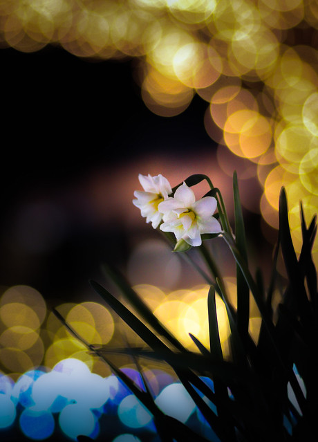 flowers blooming in the river of light