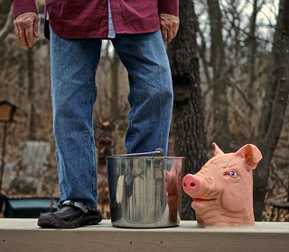 Standing on a Bench with One Foot in a Bucket that is Next to the Head of a Pig
