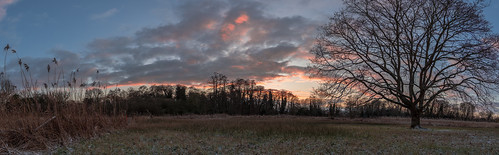 woodpecker tree lone snow snowy hitchin hertfordshire nature sunset nikon d7200 panorama 1224mm nikkor f4 dusk rider landscape england english sky grass 7dwf