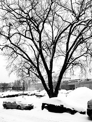 Griffintown parking in winter